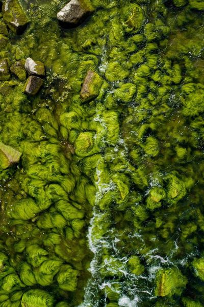 Water Green Color Waterfront River High Angle View Nature Floating On Water Algae No People Day Beauty In Nature Large Group Of Animals Animal Themes Outdoors Lily Pad Close-up Stones & Water Baltic Sea Baltic Coast Klaipeda Lithuania