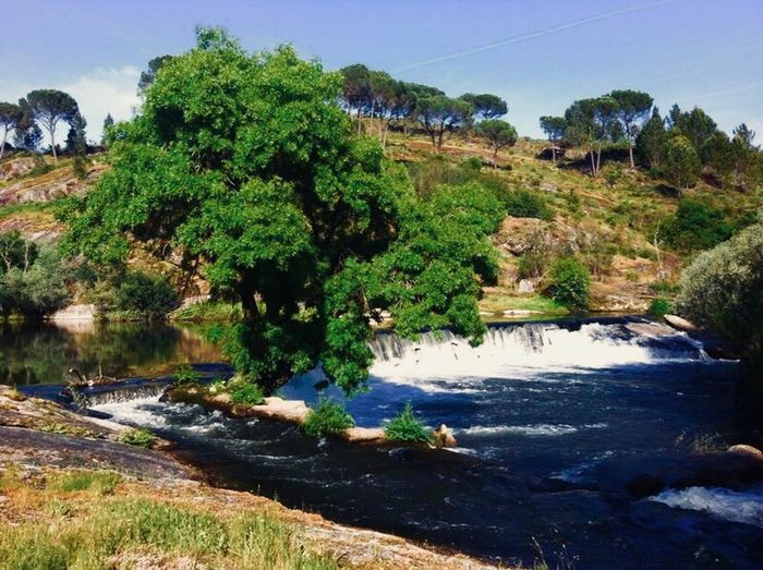 Ferreiros Portugal Tree Water Nature River Tranquil Scene Tranquility Beauty In Nature