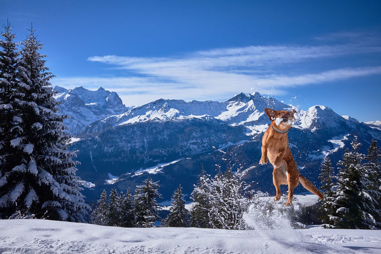 Dog On Snowcapped Mountain Against Sky