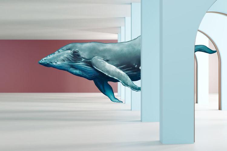 Bird flying against blue wall