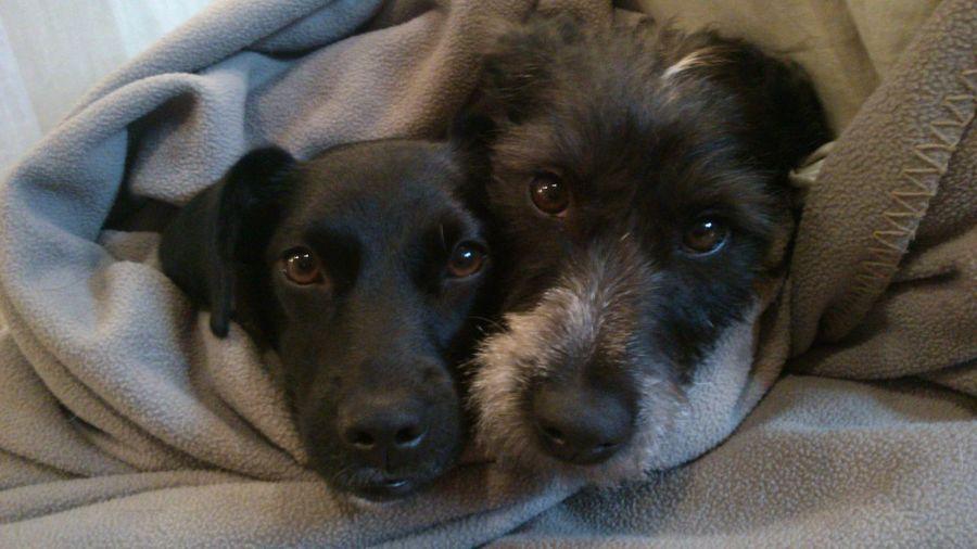 Dentro de la manta. Dog Pets Dogs Petstagram