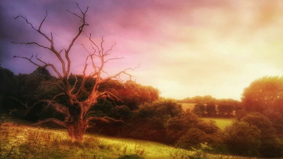 in romantic mood 🌼Feel Inspired Scenics Sunset Non-urban Scene Tree Hdr Snapseed Outdoors Colorful First Eyeem Photo Creativity Nature The Magic Mission My Favorite Place No People Outdoor Millennial Pink
