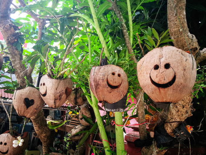 smile coconut flower pot HuaweiP9 Huaweiphotography Huawei P9 Leica Huawei EyeEm Selects Tree Anthropomorphic Face Anthropomorphic Smiley Face Tree Trunk Close-up Plant Smiley Face Representation Human Representation ArtWork Sculpture Statue Art Female Likeness Male Likeness Sculpted