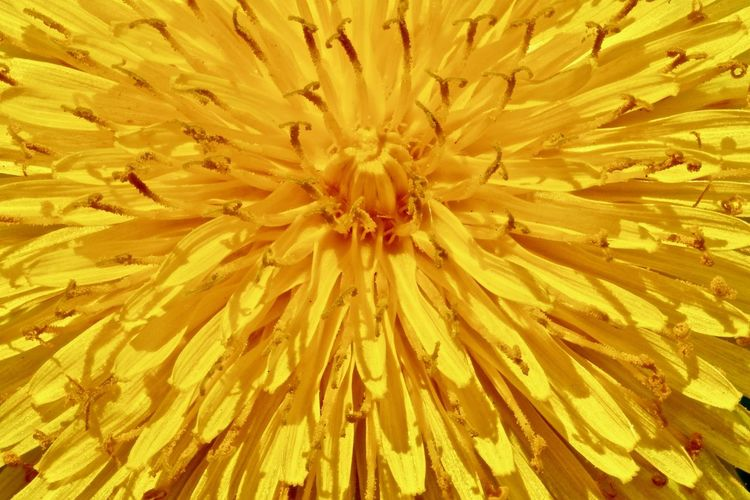 Full frame shot of yellow flower blooming outdoors