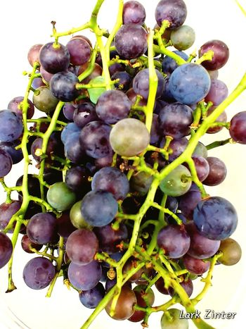 LG V30 Nature_collection Naturelovers Garden Bounty Grapes Wicked Wednesday The Color Purple Days Of Babysitting Biology Grape Close-up Plant Vine - Plant