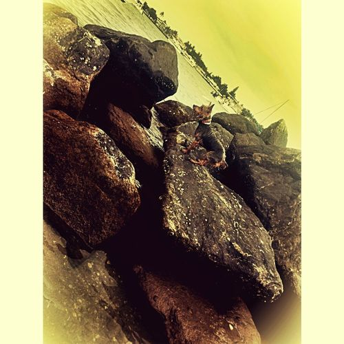My pup apparently likes climbing rocks Liltank Climbingrocks Silky Dogs