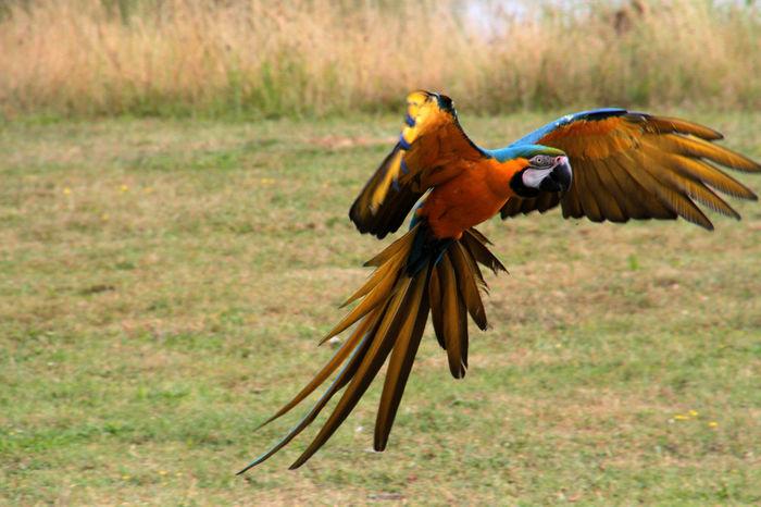 Beauty In Nature Bird Bird Photography Birds Of EyeEm  Nature Parrot Parrot Lover Zoology