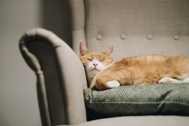 Portrait of cat sleeping on sofa at home