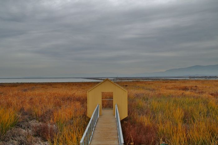 Alviso Marina County Park Cloud - Sky Architecture Beauty In Nature Horizon Over Water Landscape Tranquility Outdoors Alviso Alviso County Park Alviso Marina County Park Yellow Yellow Color Grass Scenics - Nature Tranquil Scene No People Environment Built Structure The Way Forward Eyem Best Shots EyeEm Best Shots EyeEm Nature Lover EyeEm Selects Contrast Field Autumn Mood
