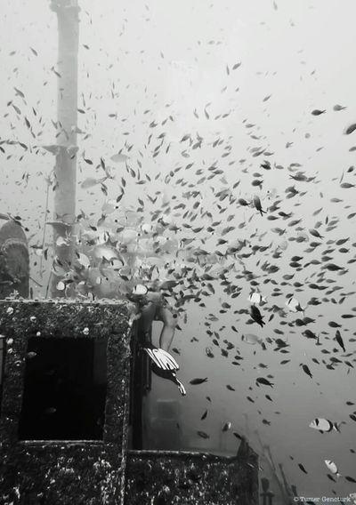 Underwater Photography Underwater Blackandwhite Photography Blackandwhite Monochrome Shipwreck Malta