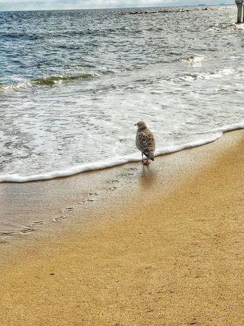 Animal Themes Bird Seagull Perching Coastline