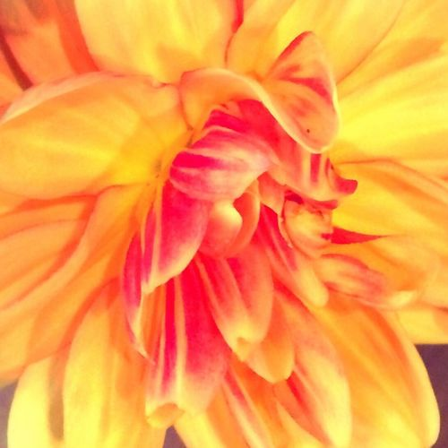 The World Needs More Yellow Yellow Flower Porn Flower