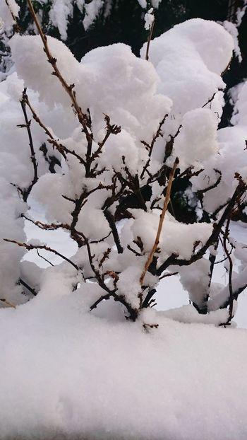 Snow ❄ Taking Photos January 2015 Winter