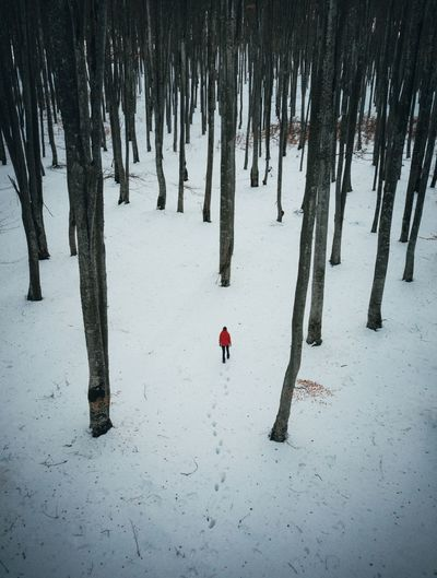 Snow Cold Temperature Winter Tree Tree Trunk Trunk Plant Land Nature Forest Real People Covering Day Beauty In Nature Tranquility Frozen Scenics - Nature Non-urban Scene Tranquil Scene Outdoors WoodLand People Aerial View Aerial Photography Nature