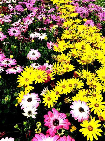 Flower Flowering Plant Plant Vulnerability  Fragility Beauty In Nature Freshness Flower Head Nature