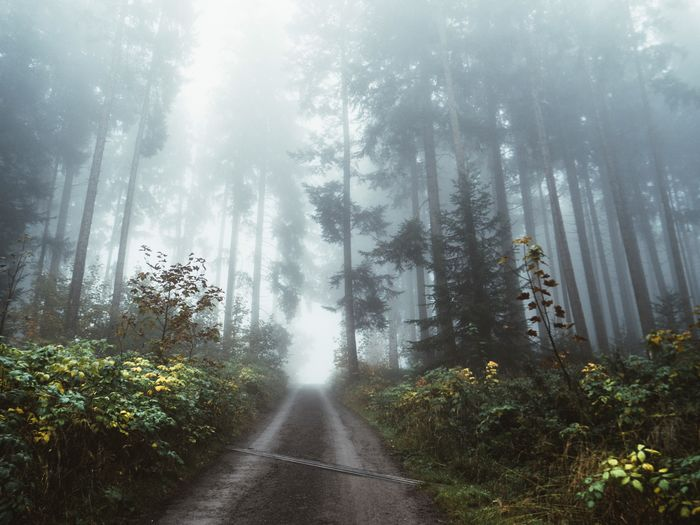 Tree Plant Forest Land Fog Beauty In Nature Tranquility Non-urban Scene WoodLand Road Environment Growth No People Direction Tranquil Scene Scenics - Nature Outdoors Nature The Way Forward Day