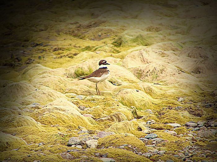 Beauty In Nature Charadrius Vociferus Day Killdeer Landscape Mossy Mossy Rock Nature No People Non-urban Scene Outdoors Rock - Object Scenics Tranquil Scene Tranquility Wildlife Wyoming