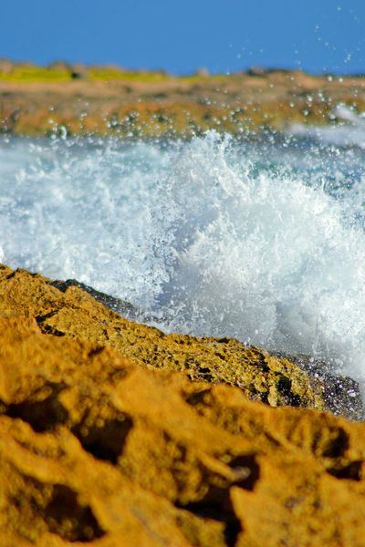 Crawling on the reef. Waves, Ocean, Nature Beach Photography Sea Hawaii Shore Beauty Macro Photography Island Outdoor Photography Saltwater