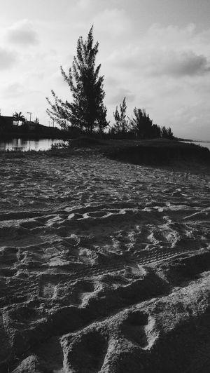 Beach Sun And Beach Summer