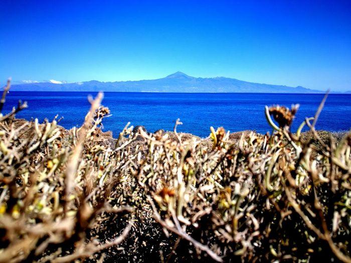 azules Cactus