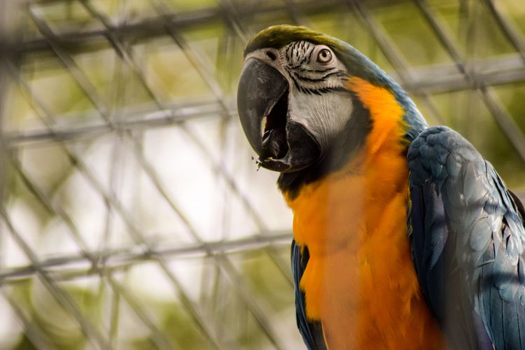 Close-up of a parrot in cage  photographyfrankfurt