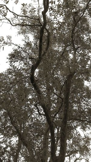 Falling Leaves Eye Of Ky Tree_collection  Tree Branches Tree Louisianaphotography Natural Simplicity Changing Seasons Beautiful Nature