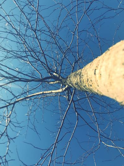 In love with a tree. Simplicity Bare Tree Blue Tree Dried Plant Branch Outdoors Day Close-up No People Sky Nature Clear Sky
