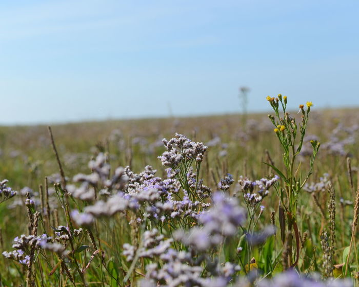 Flower Meadow Meadow Depth Of Field Horizon Infinity Blue Sky Wild Flowers Nature Microcosmos Blue Flowers Grass Meadowlands Meadow Flowers