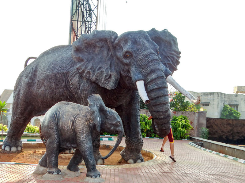 The elephant statue and half boy! Staue  Elephant Mammal Tree Outdoors Animal Trunk Day Full Length African Elephant Sky