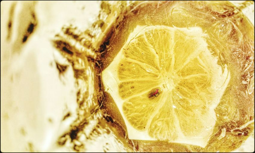 when lemon on glass Capture The Moment Lemongrass Drinking Water Question Lemon EyeEm Malaysia Starfruit Freeze Shots