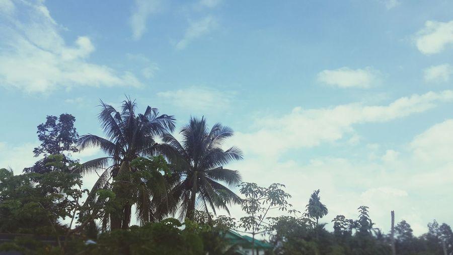 ท้องฟ้าสวยสด