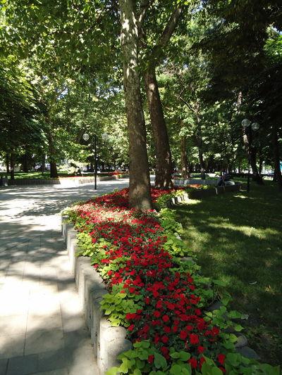 Sovetov street, Novorossiysk. City Decorative Beds Decorative Lawns Flower Beds Green Novorossiysk Plant Red & Green Shades Street Summer Tree Tree Trunk Vegetation Verdure
