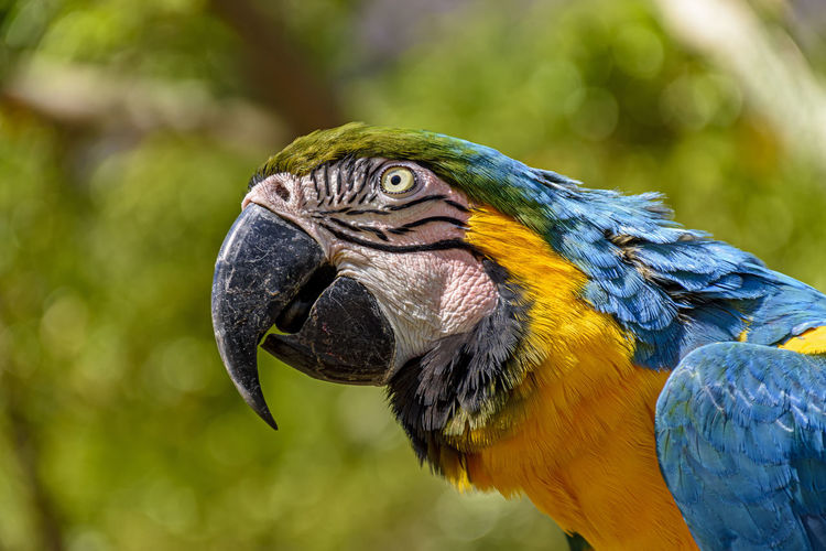 Macaw perched