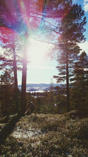 Norway Winter Sunshine ☀ Friends