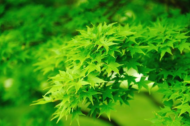 Into the green... Green Color Leaf Plant Part Plant Growth Beauty In Nature Close-up No People Nature Day Focus On Foreground Outdoors Selective Focus Tree Freshness