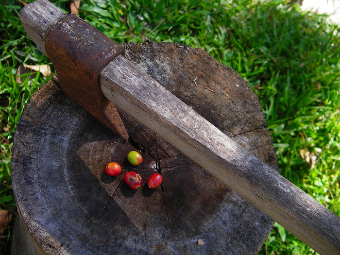 Coffee beans and axe Axe Close-up Coffe Beans Day Grass Leaf Nature No People Outdoors Tree Wood - Material
