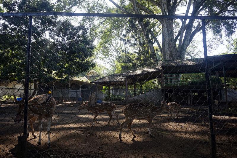 Animals Cage Deer Mammal Nature Pathetic Zoo Poor Zoey Zoo