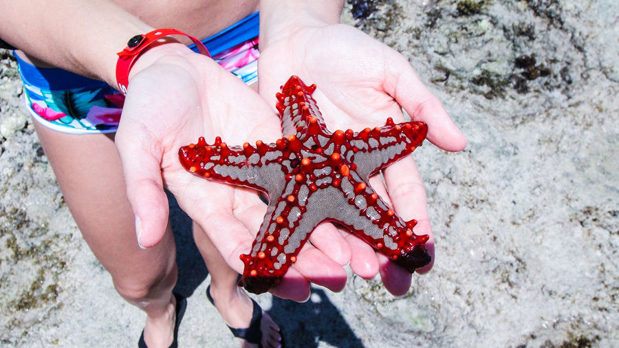 Low section of woman holding starfish at beach