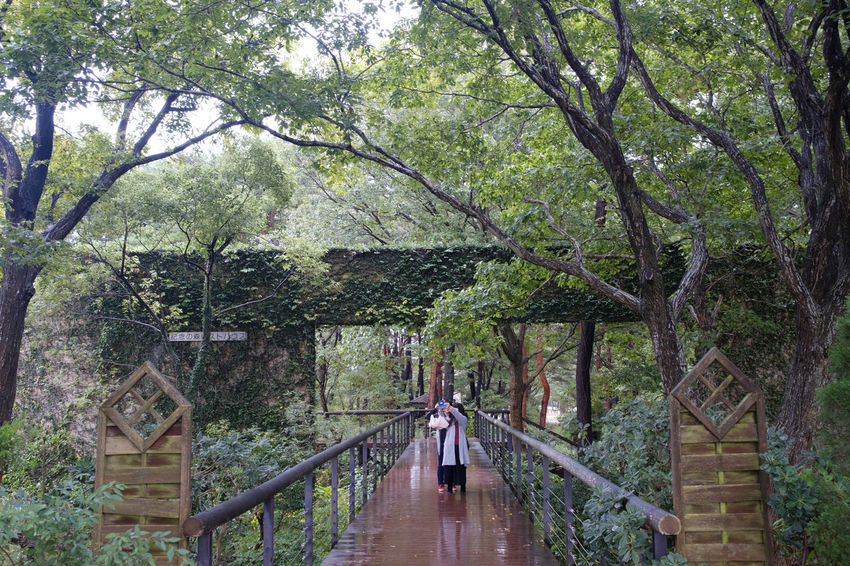 FUJIFILM X-T2 Hitachi Seaside Park HitachiSeaSidePark Japan Japan Photography Architecture Built Structure Cafe Cafe Time Day Fujifilm Fujifilm_xseries Growth Nature Outdoors Tree X-t2 ひたち海浜公園 カフェ
