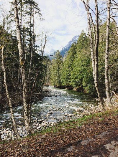 Pacific Northwest  PNW PNWonderland PNW Summers PNW Photography Pnw Paradise Pnwisbest Pnwexplorations