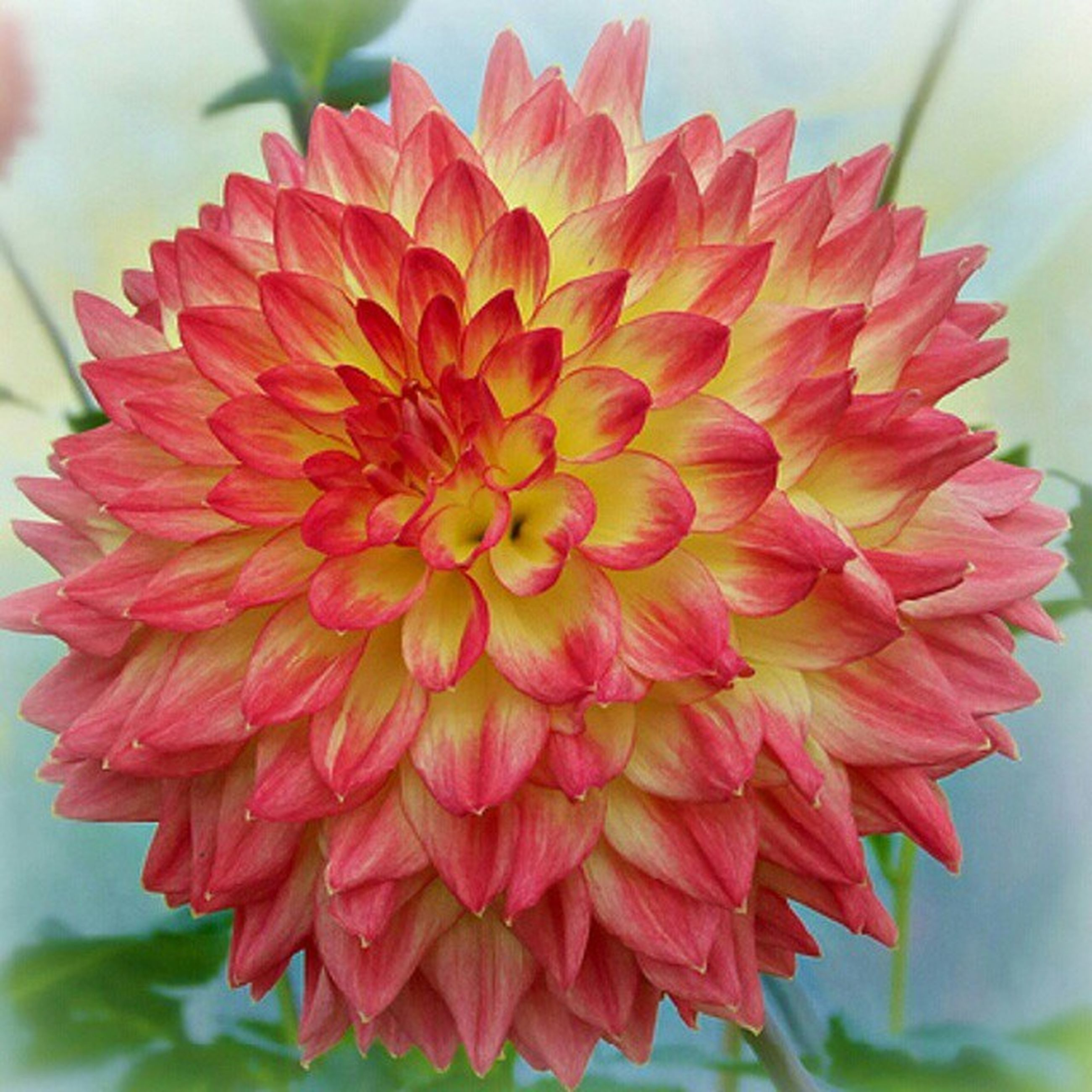 flower, petal, freshness, flower head, fragility, beauty in nature, close-up, growth, red, focus on foreground, blooming, nature, single flower, plant, in bloom, day, no people, blossom, dahlia, orange color