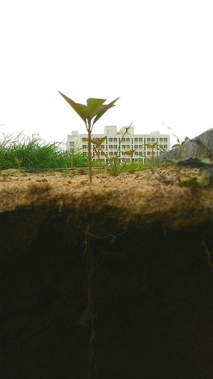 Nature Plants 🌱 Underground Roots Of Life Plantlife Plant Vs Building