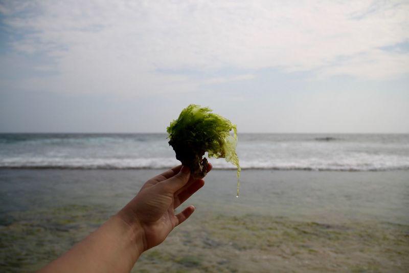 Close-up of hand holding seaweed at beach