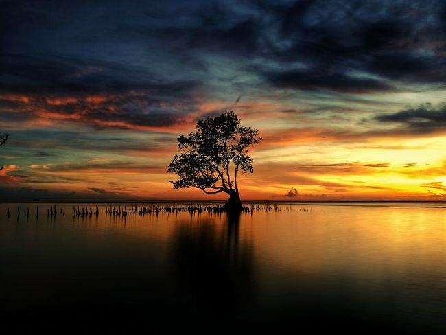 alone under sunrise in Pantai Serumpun Balikpapan East Kalimantan Sunrise Sunrise_sunsets_aroundworld Sunrise_Collection Sunrise Silhouette Sunriseporn WeLoveBalikpapan Balikpapan View, East Borneo BalikpapanLanscape Wonderful Indonesia Morning Sky Landscape_photography Nature Photography Landscape Nature Morning EyeEmNewHere Tree Water Sea Silhouette Summer Reflection Sky Horizon Over Water Cloud - Sky Seascape Romantic Sky Dramatic Sky Sky Only Cloudscape