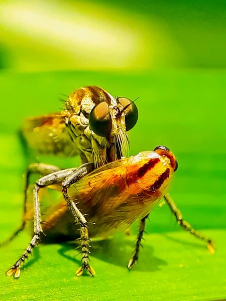 Big meal great hunt for the predator poor coachroach macro photo closedup green back sunny day Portrait Insect Animal Themes Close-up Green Color Animal Leg Green Background Animal Antenna