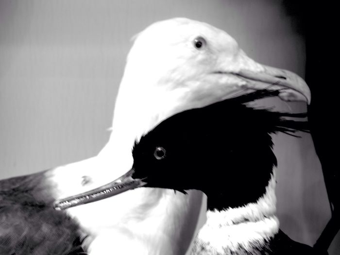 Monochrome Blackandwhite Black And White Black & White From My Point Of View Check This Out A.M.S. My Old School Birds Art