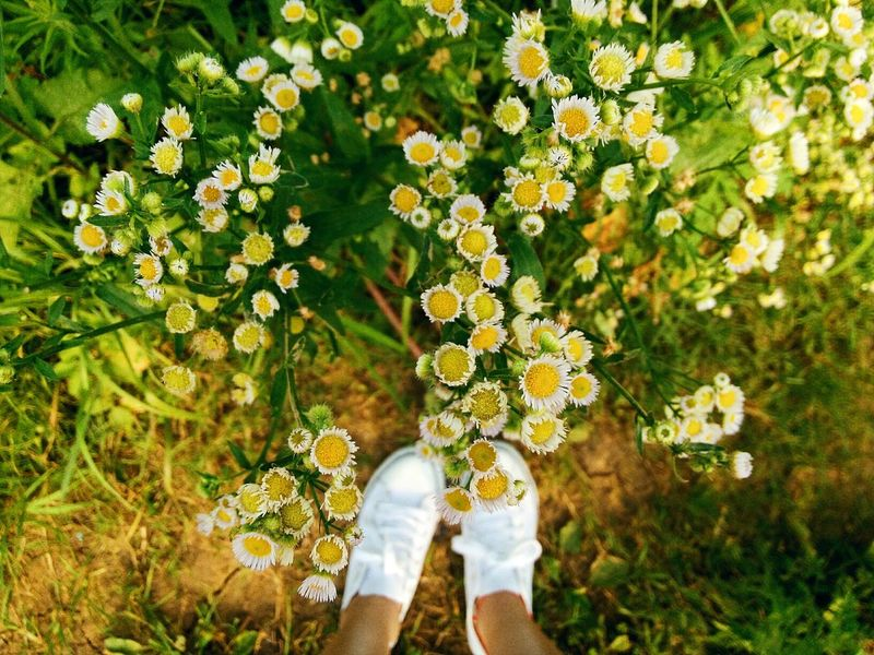Nature Lover Nature_collection Nature Photography Plants Beautiful Nature Daisy Flower Daisys In The Mountains Flower Collection Flowers Flowers, Nature And Beauty Flower Photography Flowerlovers White Shoes Warm Colors Colour Of Life