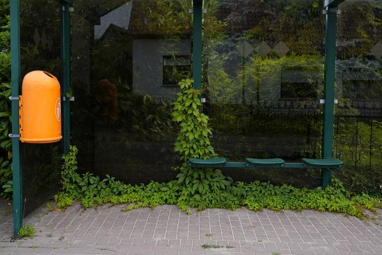 Plants growing in yard against building