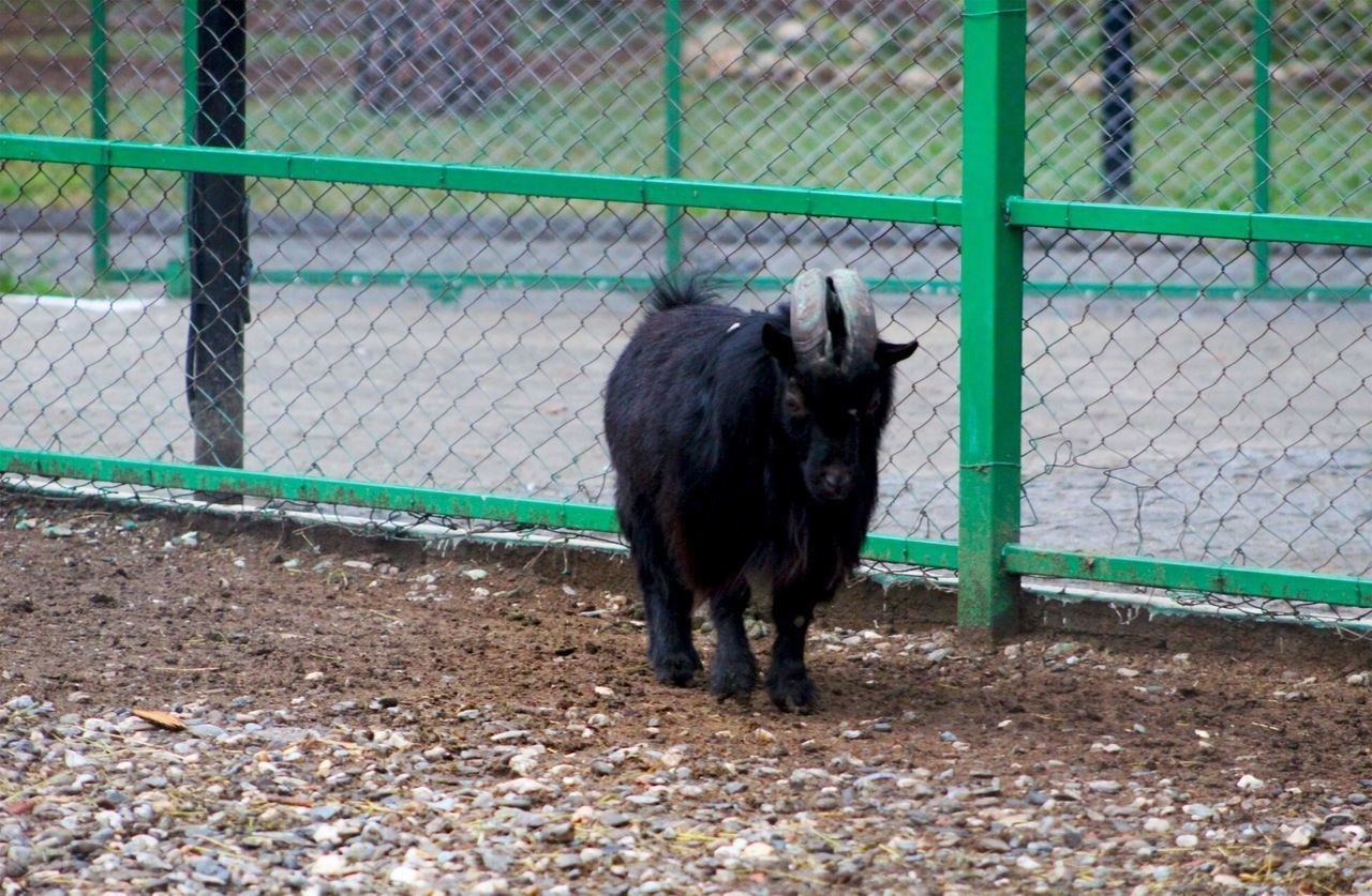 PORTRAIT OF A HORSE STANDING BY FENCE AGAINST CHAINLINK WALL
