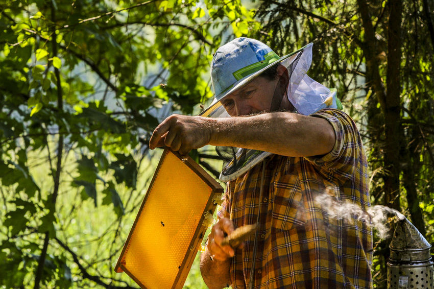 Apiary Beehives Beekeeper Beekeeper's Hat Beekeeper, Honey Day Forest Forest Ape Holding Nature Occupation One Person Outdoors Real People Senior Adult Working